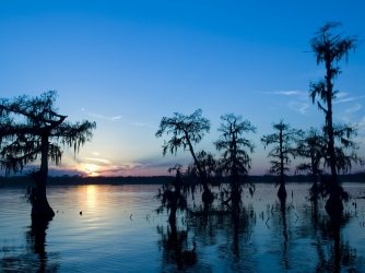 louisiana, state tree, bald cypress, island preserve, cypress