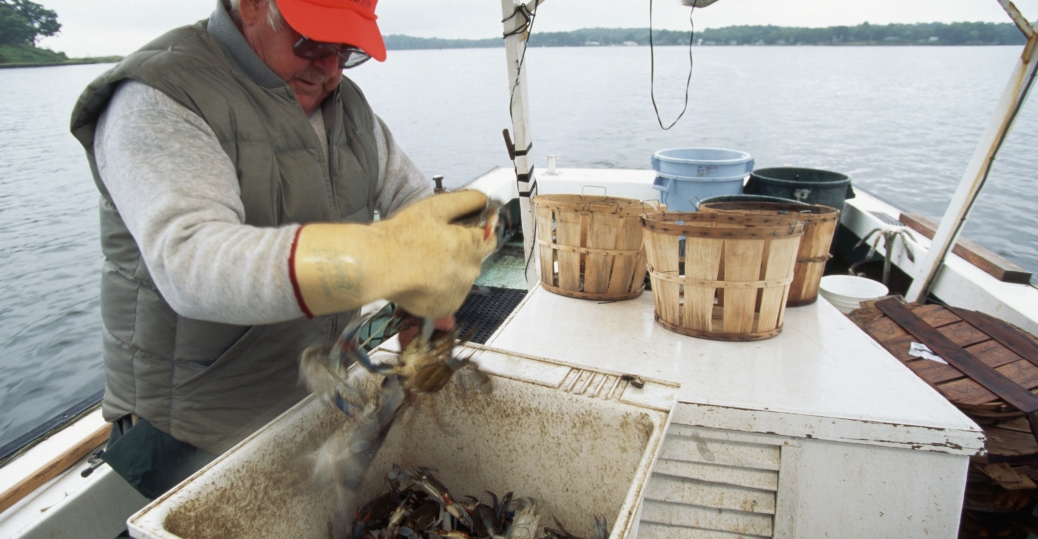 chesapeake bay, blue crabs, maryland, crabs, crab fisherman