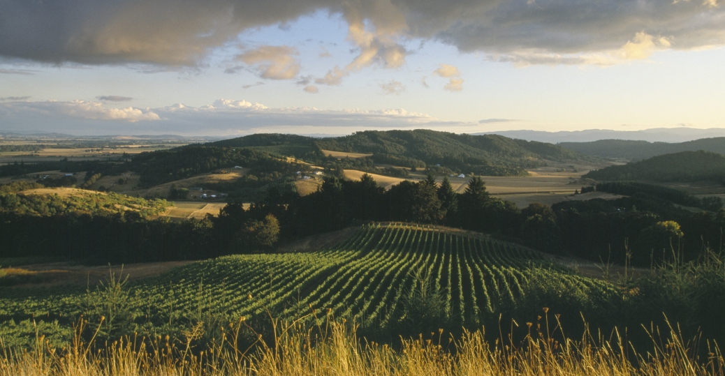 willamette valley, oregon, vineyards, pinot noir, pinot noir grape