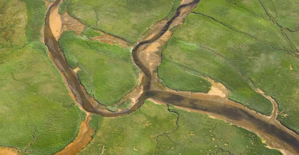 wetlands, juneau, alaska