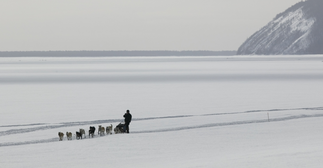 yukon river, iditarod, sled dog race, musher, alaska, anvik