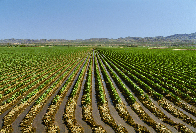 irrigated field of cotton arizona pictures arizona history com