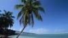 palm tree, bahia, bahia honda state park, florida keys, florida, beach