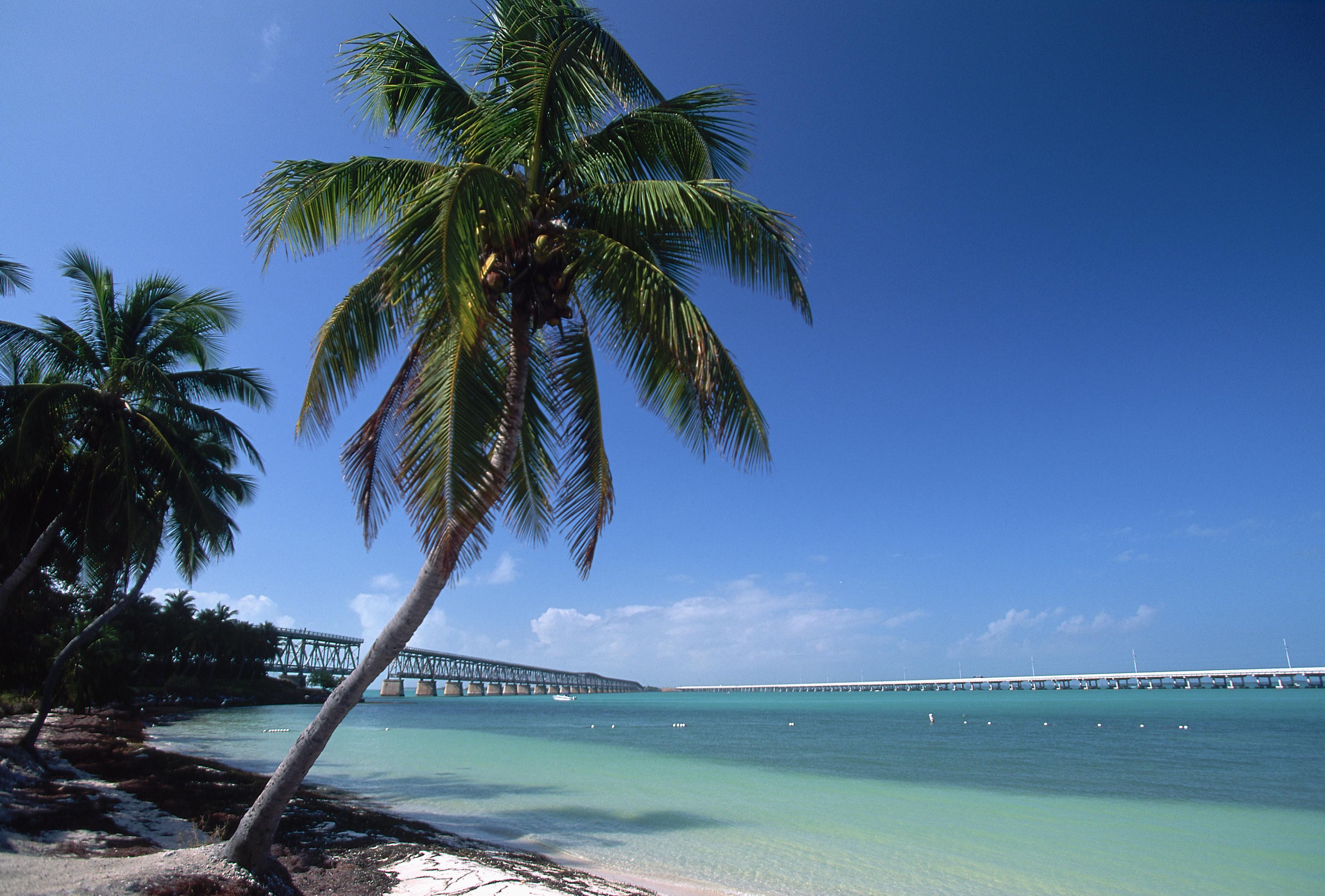 Palm Tree Bahia Honda State Park Florida Keys Beach