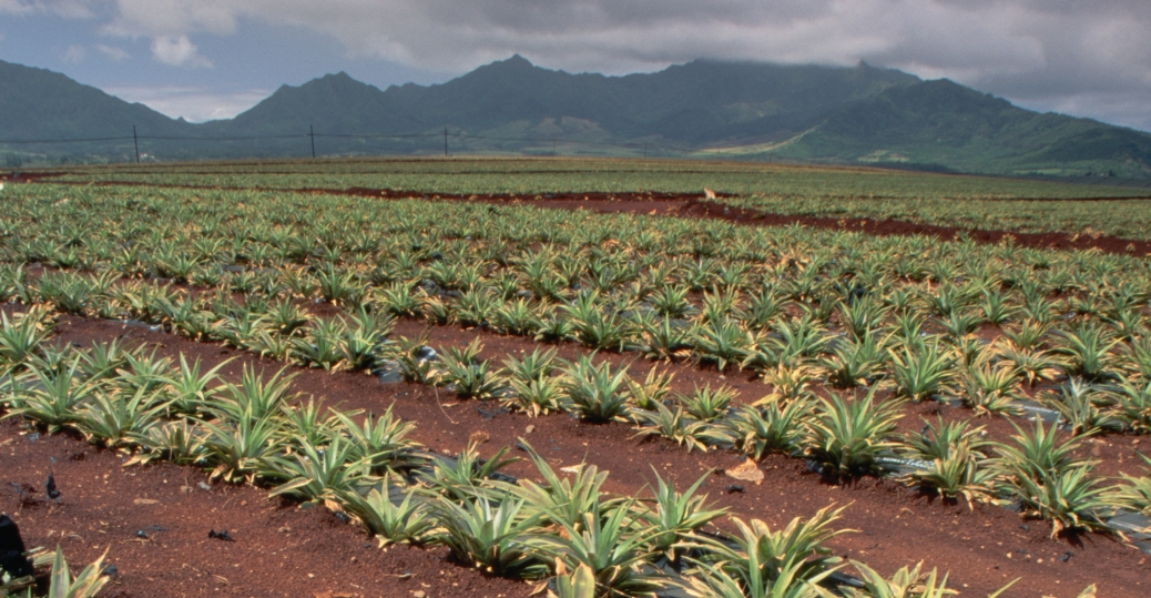 dole, plantation, pineapple, hawaii