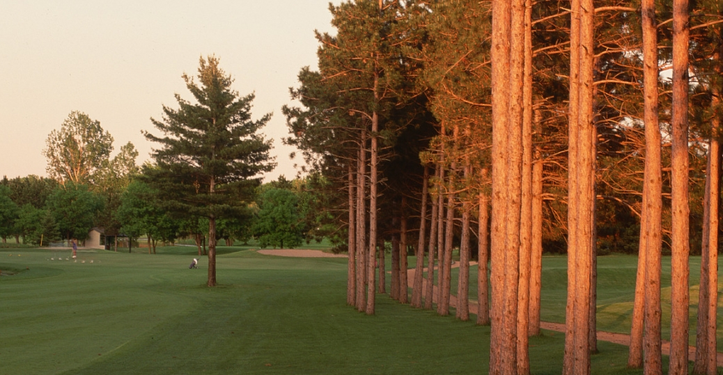 state tree, minnesota, red pine, norway pine