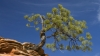 pinyon pine, sandstone, hoodoo, state tree, new mexico