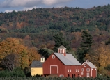 christmas tree, farm, tree farm, vermont
