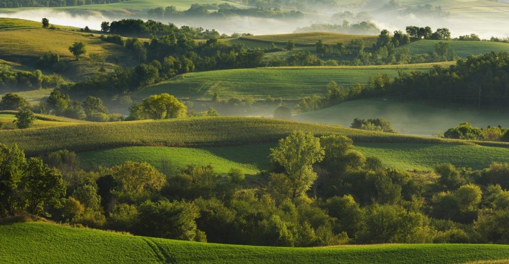 alfalfa, corn fields, wisconsin