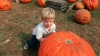 pumpkin patch, halloween, pumpkins, pumpkin picking, children