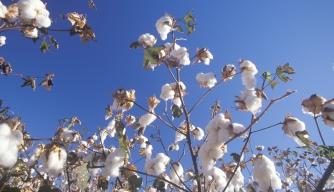 cotton gin, eli whitney, slavery, inventions
