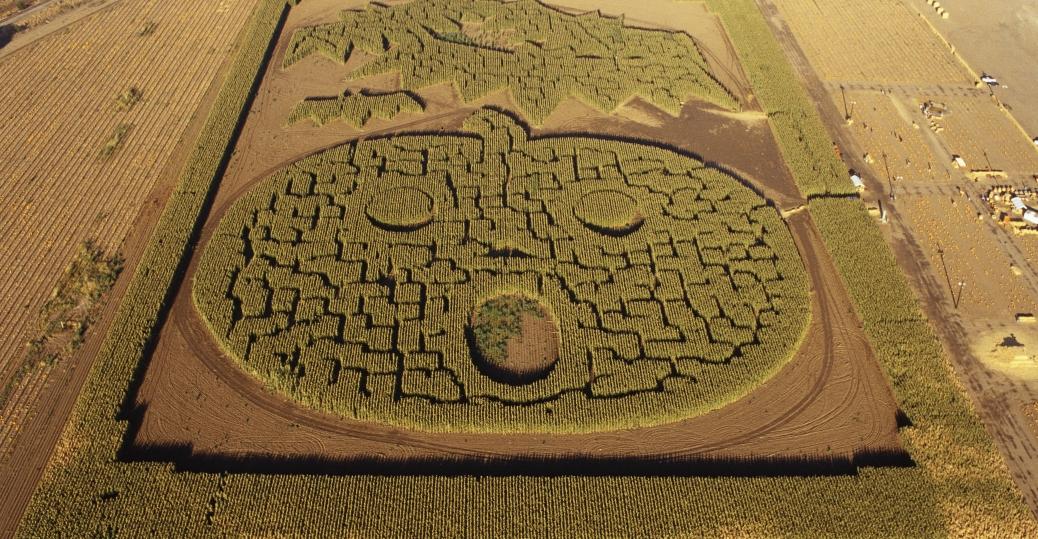corn maze, jack o'lanter, cornfield, halloween