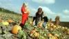 east brunswick, new jersey, giamarese farm, pumpkin picking, halloween