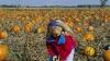 illinois, pumpkin patch, pumpkin picking, halloween