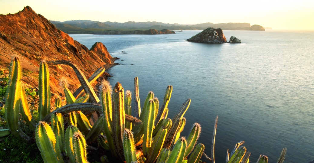 senita cacti, isla datil, sonora, mexico
