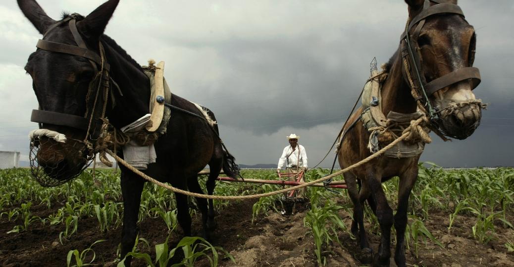 villalfo carmona, corn field, zaragoza, puebla, mexico city, mexico