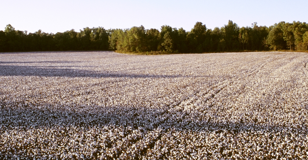 slavery, cotton field, tennessee, slave life, black history