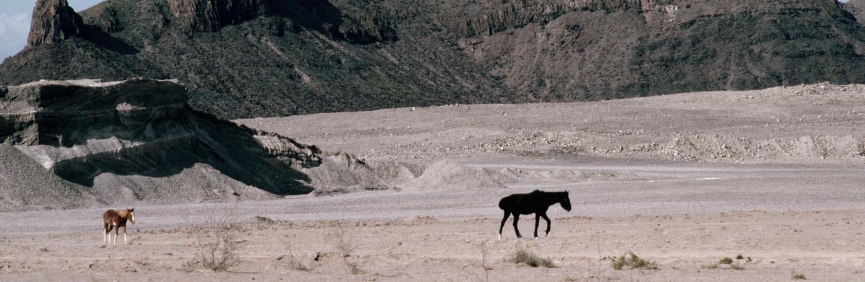 durango, mexico, desert