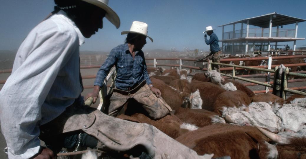 mexican cowboys, vaqueijos, durango, mexico