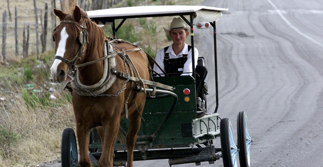mennonite, durango, mexico, horse-drawn carriage, esfuerzos unidos