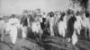 salt march, 1930, indians, gandhi, ahmadabad, arabian sea, british salt taxes