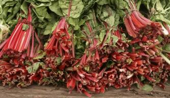 Rhubarb: A Love Affair