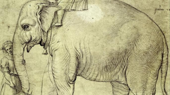 Sketch of Hanno c. 1514.