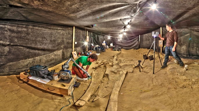 Smithsonian researchers document one of the fossil whales from the Cerro Ballena site.