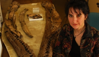 Arthritisaurus: Did Elderly Dinos Get Inflamed Joints?
