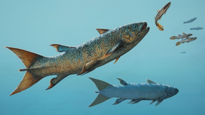 The fast-swimming coelacanth Rebellatrix chases smaller species of fish in the Early Triassic ocean west of Pangaea.