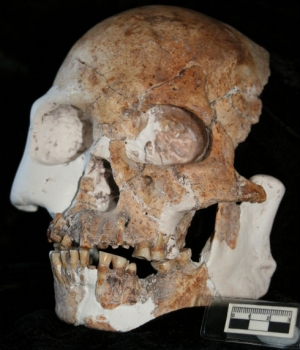 Red Deer Cave People Skull