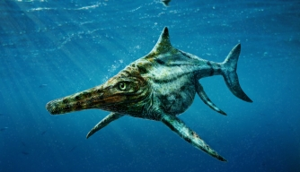 "Scientists Identify Scottish Fossil as Jurassic-Age ""Marine Lizard"""