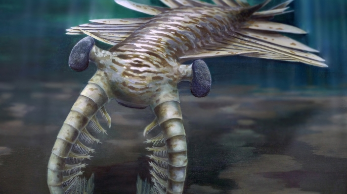 Anomalocaris ruled the world's oceans 500 million years ago, thanks in part to its remarkable vision.