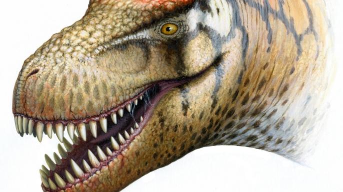 hith t-rex cousin zhuchengtyrannus