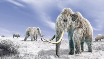 Can Scientists Clone a Woolly Mammoth? Should They?