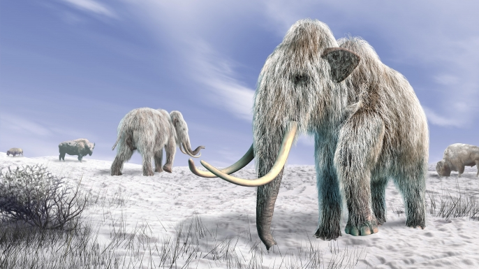 hith wooly mammoth clone Two mammoth in a field covered of snow.