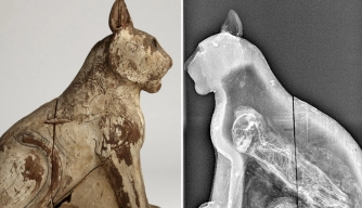 X-ray revealing a skeleton inside an Ancient Egyptian cat mummy.