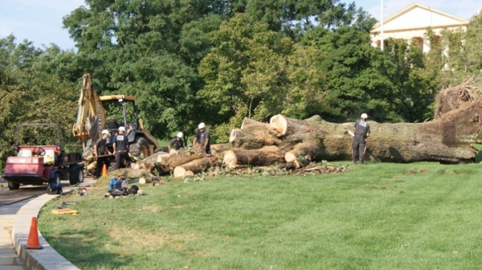Workers clear away the trunk and branches of the Arlington Oak, a historic tree near John F. Kennedy's gravesite that fell during Hurricane Irene last weekend.