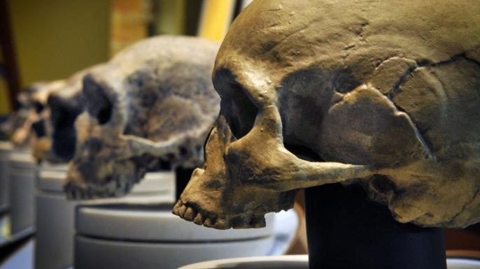 neanderthal, early human