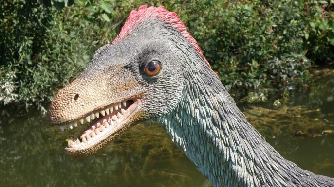 dinosaurs, birds