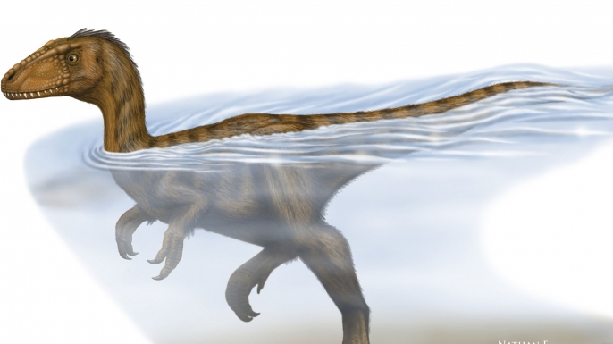 Reconstruction of a swimming theropod.