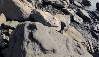 dinosaur fossils alaska