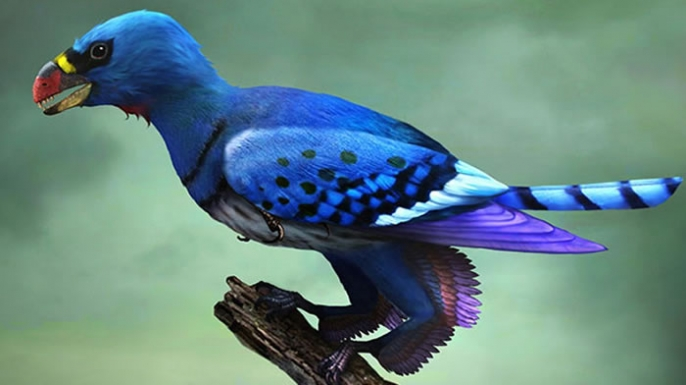 Artist's reconstruction of the basal bird Sapeornis, shown with its leg feathers.