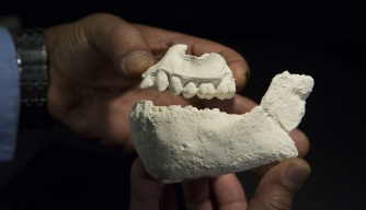 "Newly Discovered Human Ancestor Species May Have Lived Alongside ""Lucy"""