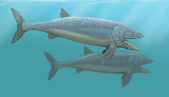 Scientists Discover World's Largest Fish
