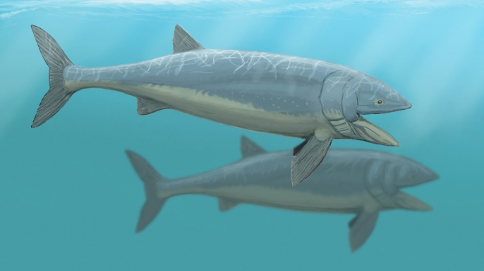 Scientists discover world s largest fish history in the for The history of fish