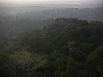 Amazon jungle in Brazil. (Credit: Dado Galdieri/Bloomberg via Getty Images)