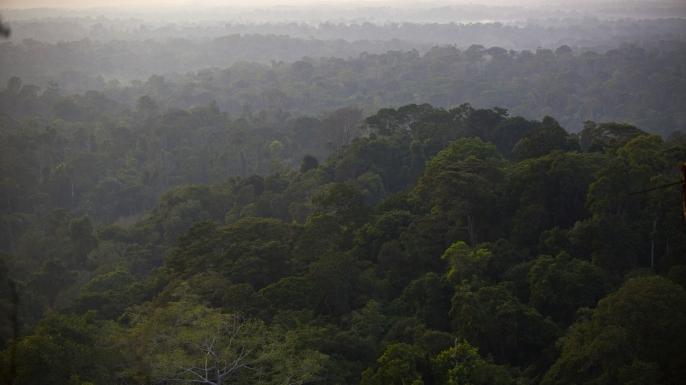 Amazon jungle in Brazil.