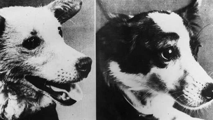 Belka (left) and Strelka.
