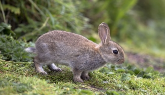 Rabbits Unearth Ancient Treasures at English Landmark
